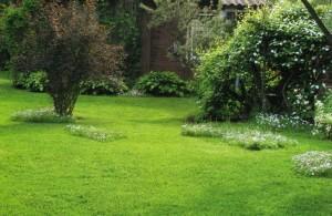 Газонное творчество с маргаритковыми лужайками