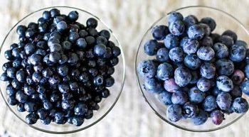 Голубика или черника? Как легко отличить ягоды