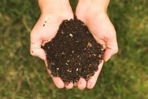 Гумус — источник плодородия почвы