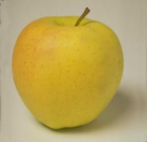 Характеристика сорта деревьев яблони «Голден Делишес» (Golden Delicious) по восприимчивости к регуляторам роста