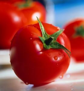 Испытание ранних сортов томатов, отзывы дачников