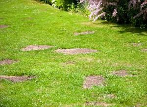 Как бороться с сорняками, мхом, лишайниками на газоне