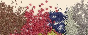 Как дражировать семена в домашних условиях