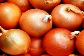 Как подготовить лук-севок к посадке: прогревание и замачивание