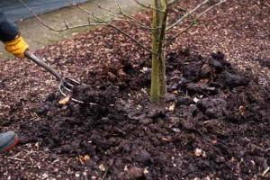 Как посадить саженцы плодовых деревьев