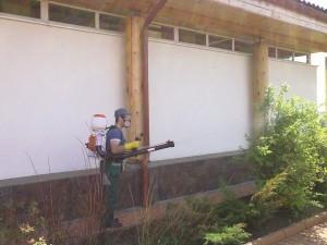 Когда опрыскивать деревья яблонь: влияние погоды на эффективность действия химических средств прореживания