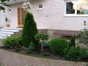 Композиции из хвойных растений. Фото