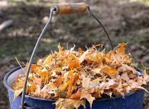 Нужно ли убирать листья в саду