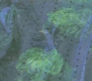 Пленка, нетканое полотно — защита молодых растений
