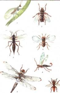 Полезные насекомые, птицы и растения для развития вашего сада