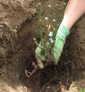 Посев осенью. Практические советы по осеннему посеву растений и цветов