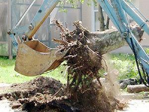 Работаем со взрослыми деревьями