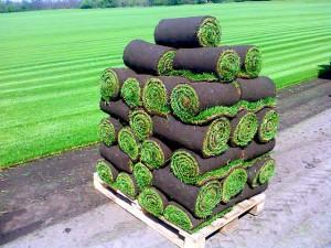 Рулонный газон, что нужно знать об укладке