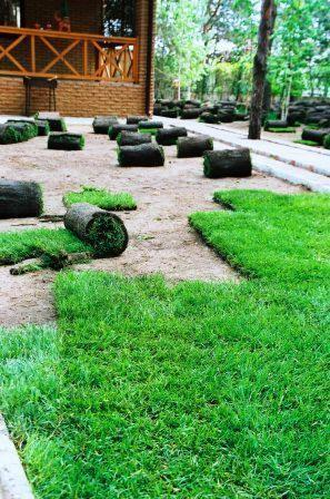 Рулонный газон преимущества и недостатки, уход