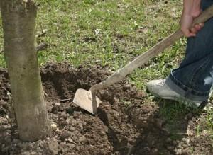 Рыхление почвы, прополка