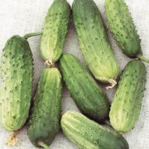 Семена огурцов. Описание сортов