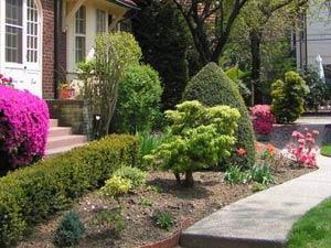 Солитерное выращивание декоративных растений и кустарников в миксбордере
