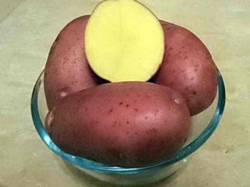 Сорт картофеля «Беллароза», описание характеристик и особенностей выращивания