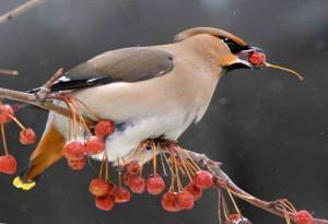 Способы защиты урожая от птиц