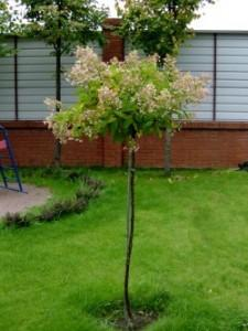 Техника посадки деревьев