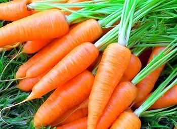Уборка моркови и способы хранения урожая