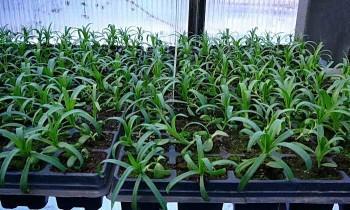 Условия и способы выращивания рассады овощей