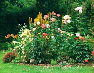 Варианты одноцветных миксбордеров для сада