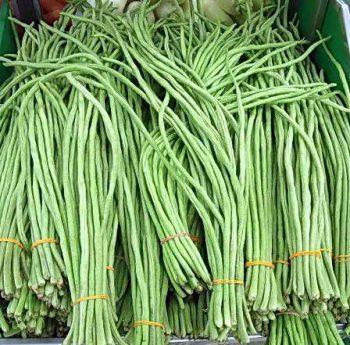 Вигна, выращивание фасоли рассадой и посевом семян в открытый грунт