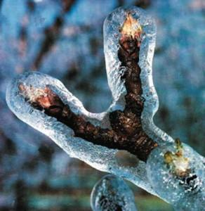 Защита насаждений от заморозков для больших площадей