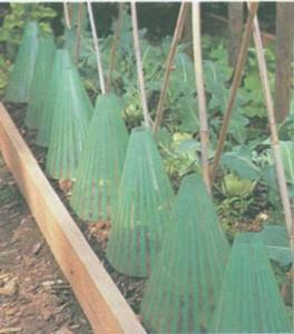 Защита растений: пленка для мульчирования, колпаки и пленочный тоннель