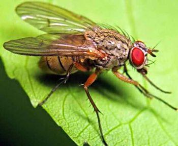 Защита участка от капустной мухи и методы борьбы с ней