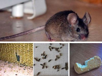 Борьба с грызунами: несколько простых и эффективных решений