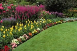 Выращиваем цветы правильно