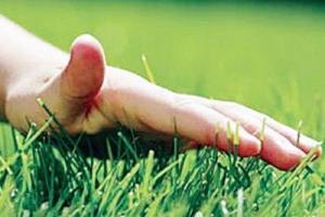 Уход за газоном: от сезона до сезона