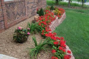 Выбираем цветы для осеней клумбы
