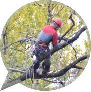 Особенности удаления высоких деревьев