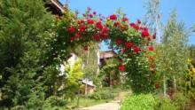 Арка для роз