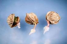 Что такое скарификация семян и как ее провести в домашних условиях
