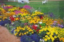 Цветочные композиции своими руками в цветнике. Сорта роз