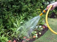 Как часто поливать растения