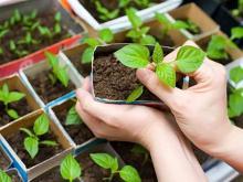 Как поливать рассаду в горшочках, какой водой и что добавлять