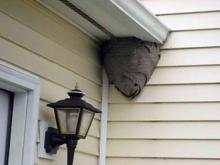 Как уничтожить осиное гнездо и способы уменьшить количество ос