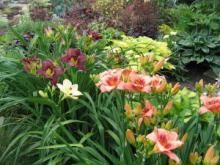 Составление цветочной композиции из лилейника