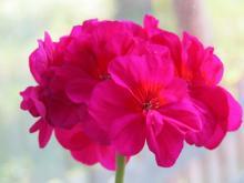 Неприхотливые растения для домашнего уюта