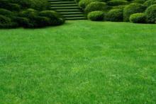 Как вырастить отличный газон